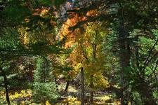 Pine Canyon Trail 26 - Tonto National Forest - Arizona - USA