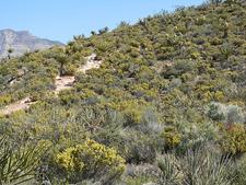 Pine Creek Canyon Trail 03