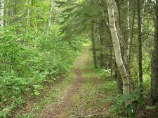 Pine Creek Loop Trail 280 - Tonto National Forest - Arizona - USA
