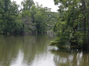 Pine Island Bayou
