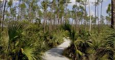 Pineland Trail
