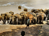 8 Days Sri Lanka - Adventure Tour