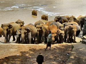 8 Days Sri Lanka - Adventure Tour Fotos