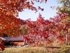 Pisgah National Forest NC Along Blue Ridge Parkway