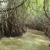 Pitchavaram Mangrove Forest