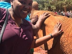 Play With Baby Elephants in Nairobi Photos