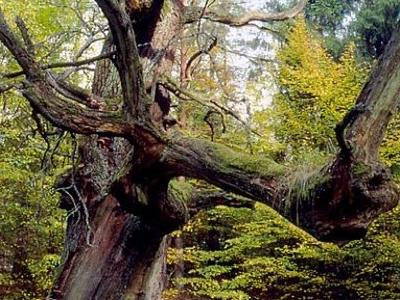 Pod Dębami Nature And Landscape Complex