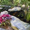 Pond Inside Sunken Gardens - St. Petersburg