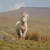 Pony In Brecon