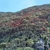 Poor Knights Island NZ Landscape