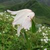 Porompat-Orchids
