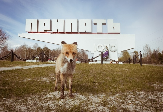 The Ultimate 2- Day Chernobyl Tour From Kiev Photos