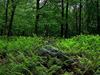 Promised Land State Park