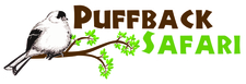 Puff Back Safaris Logo 01