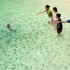 Pulau Payar Marine Park - Best Marine Park