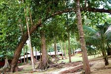 Pulau Tiga Park - Green Jungle