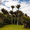 @ Punakaiki - West Coast - South Island NZ