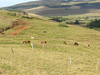 Puna Pau Landscape - Easter Island