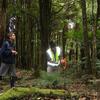 Pureora Forest Park - North Island - New Zealand