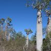 Tsimanampetsotse National Park