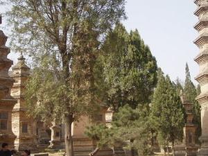 Pagoda Bosque en el Templo Shaolin