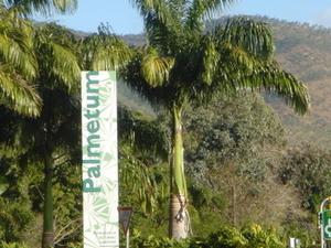 El Palmetum