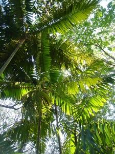 Palmetum Townsville