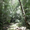 Paluma Range National Park