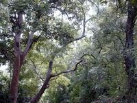 Pama Reserva