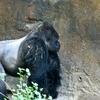 Patrick Dallas Zoo