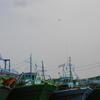 Pea Green Boats