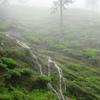 Monsoon Stream In Peermade