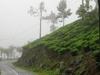 Road Winds Through Tea Estates