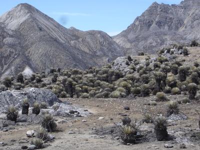 Pico Piedras Blancas
