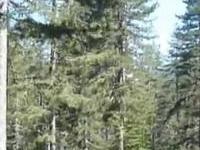 Pindo Parque Nacional