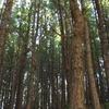 Forest At Kuttikkanam