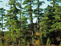 Sylvania Wilderness