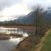 Pitt Lake Bog And Dike
