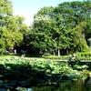 Pond And Gazebo In Goodale Park