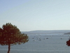 Poole Harbour From Hill Less Brownsea Tree