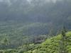 Pothamedu View Point Tea Plantation