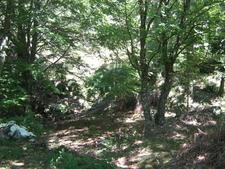 Forest Area In Croce Di Pruno