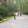 Qingnianhu Park