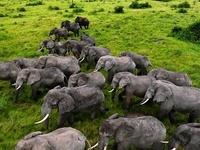Lions And Gorilla Safari