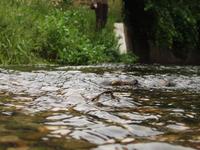 Río pantanoso