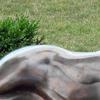 Rabbit Maytag Park Newton Iowa