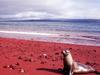 Rabida Island, Red Sand Beach