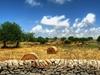 Ragusa - Sicilian Landscape