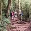 Rain Forest Mandara