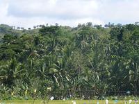 Rajah Sikatuna Parque Nacional